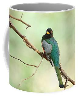Elegant Trogon At Chiricahuas'  South Fork Coffee Mug