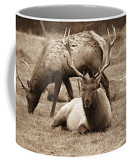 Coffee Mug featuring the photograph Elk by Athala Carole Bruckner