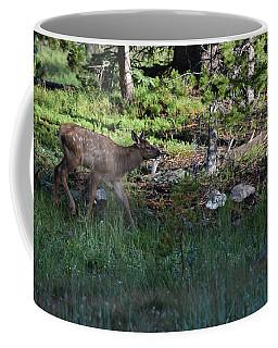 Baby Elk Rmnp Co Coffee Mug