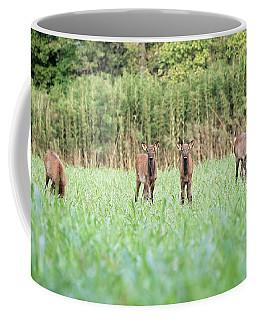 Elk Calves Coffee Mug