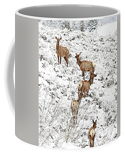 Elk Cows In Snow Coffee Mug