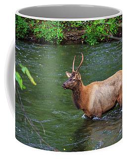 Elk In The Stream 2 Coffee Mug