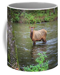 Elk In The Stream Coffee Mug