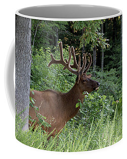 Elk Portrait Coffee Mug