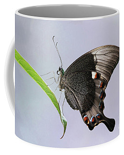 Emerald Peacock Swallowtail Butterfly V2 Coffee Mug
