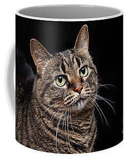 Emmy The Cat Ponder Coffee Mug