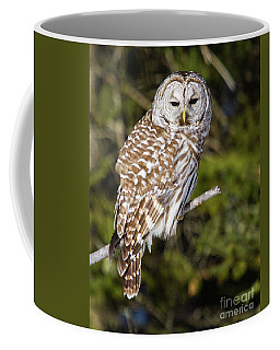 Enchanting Barred Owl Coffee Mug