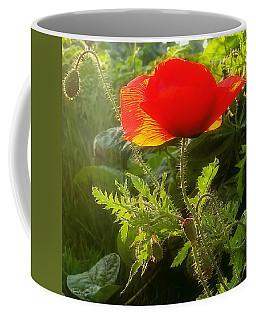 Red Poppy At Sunset Coffee Mug