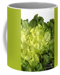 Escarole Leaves Cichorium Endivia Coffee Mug
