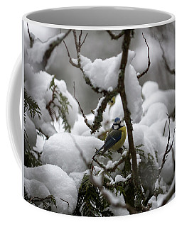 Eurasian Blue Tit In Winter 22 Coffee Mug