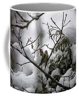 Eurasian Blue Tit In Winter Coffee Mug