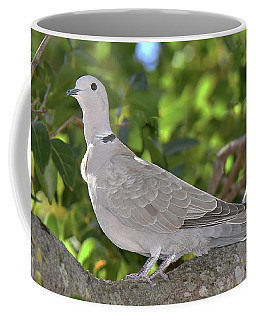 Eurasian Collared-dove Coffee Mug