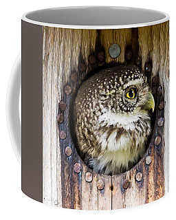 Eurasian Pygmy Owl In Profile Coffee Mug