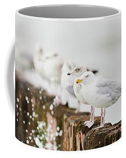 European Herring Gulls In A Row  Coffee Mug