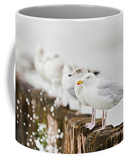 Coffee Mug featuring the photograph European Herring Gulls In A Row  by Nick Biemans