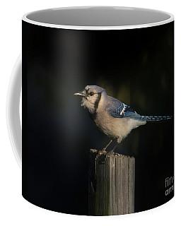 Evening Blue Jay Coffee Mug