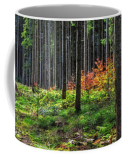 Evening Light Coffee Mug