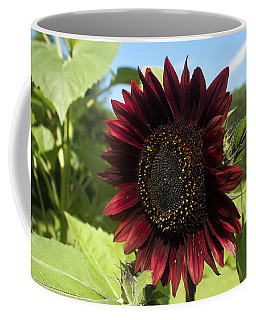 Coffee Mug featuring the photograph Evening Sun Sunflower #1 by Jeff Severson