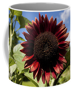 Coffee Mug featuring the photograph Evening Sun Sunflower #2 by Jeff Severson