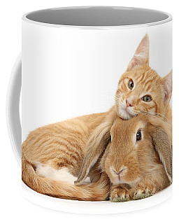 Everybody Needs A Bunny For A Pillow Coffee Mug