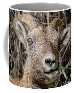 Ewe Must Be Kidding Coffee Mug