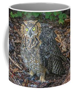 Eye To Eye With Owl Coffee Mug