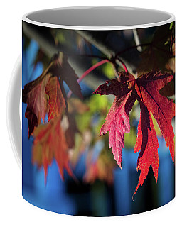 Fall Color 5528 19 Coffee Mug