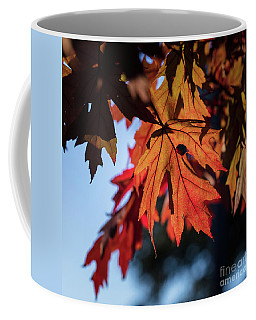 Fall Color 5528 21 Coffee Mug