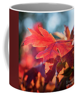 Fall Color 5528 25 Coffee Mug