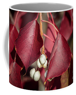 Fall Color 5528 27 Coffee Mug