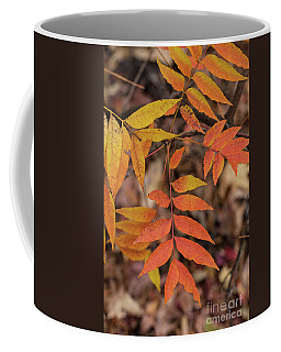 Fall Color 5528 29 Coffee Mug