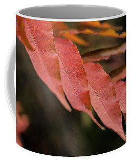 Fall Color 5528 31 Coffee Mug
