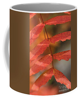 Fall Color 5528 34 Coffee Mug