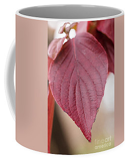 Fall Color 5528 52 Coffee Mug by M K  Miller