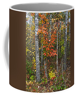 Fall Color At Gladwin 4543 Coffee Mug
