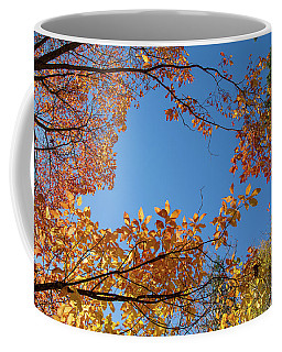 Fall Colors In Hoyt Arboretum Coffee Mug