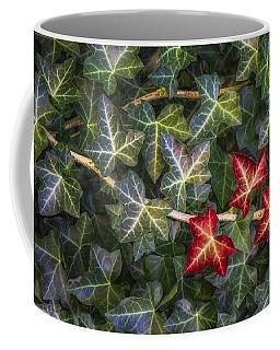 Coffee Mug featuring the photograph Fall Ivy Leaves by Adam Romanowicz
