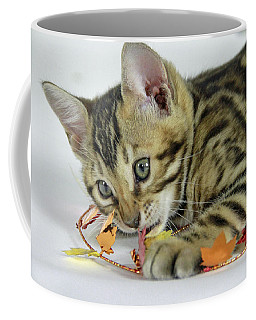 Fall Kitten Coffee Mug by Shoal Hollingsworth