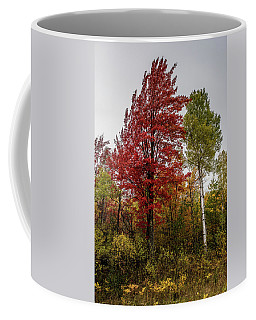 Coffee Mug featuring the photograph Fall Maple by Paul Freidlund