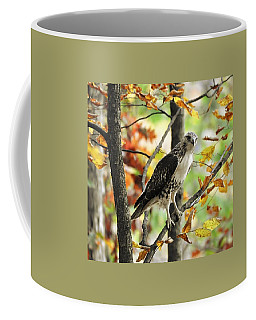 Fall Red-tailed Hawk Coffee Mug