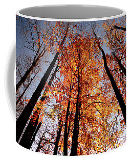 Coffee Mug featuring the photograph Fall Trees Sky by Meta Gatschenberger