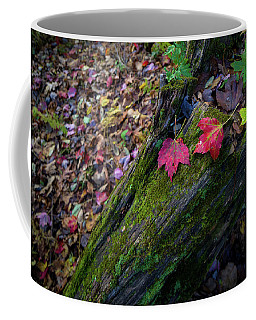 Coffee Mug featuring the photograph Fallen Leaves On The Limberlost Trail by Lori Coleman