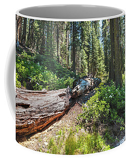 Fallen Tree- Coffee Mug