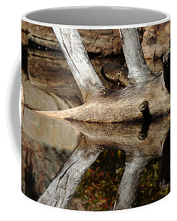 Coffee Mug featuring the photograph Fallen Tree Mirror Image by Debbie Oppermann
