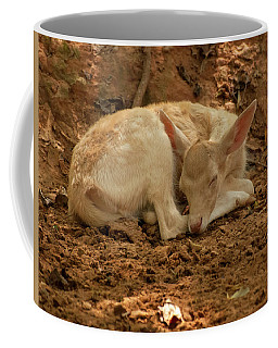 Coffee Mug featuring the photograph Fallow Deer Fawn Sleeping by Chris Flees