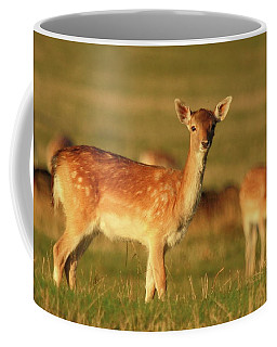 Fallow Golden Hour Coffee Mug