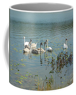 Family Of Swans Coffee Mug