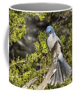 Fanning Scrub Jay Coffee Mug