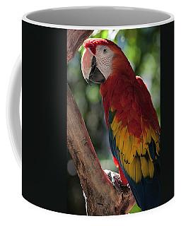 Feathered Rainbow Coffee Mug
