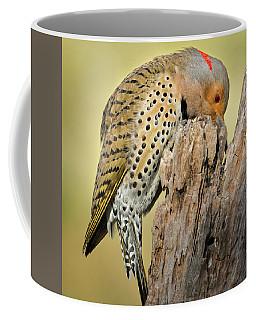 Feeding Flicker Square Coffee Mug